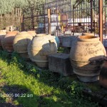 Rustic Italian Orchard Pots
